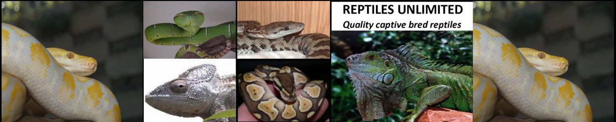 Reptiles Unlimited: South Africa